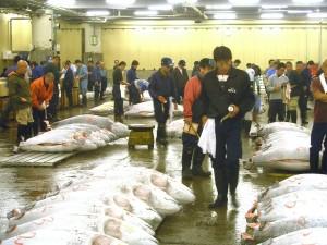 DESCARGA.- El atún rojo del Atlántico lega al mercado de Tsukiji envuelto en hielo