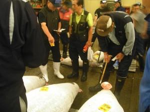 COMPRADORES METICULOSOS.- Un comprador estudia la calidad de un   atún examinando las vetas de su cola
