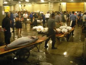TRASLADO.- Los atunes se trasnportan en carretones hasta la sala   de ronqueo, los camiones y los puestos del mercado