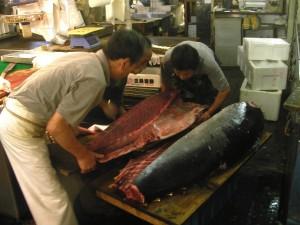 SUSHI.- De los grandes lomos del atún surgen pequeñas obras   maestras japonesas